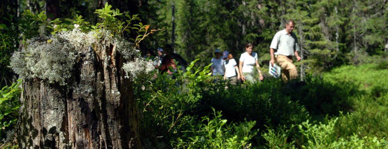 Bear Excursions in Dalarna Sweden